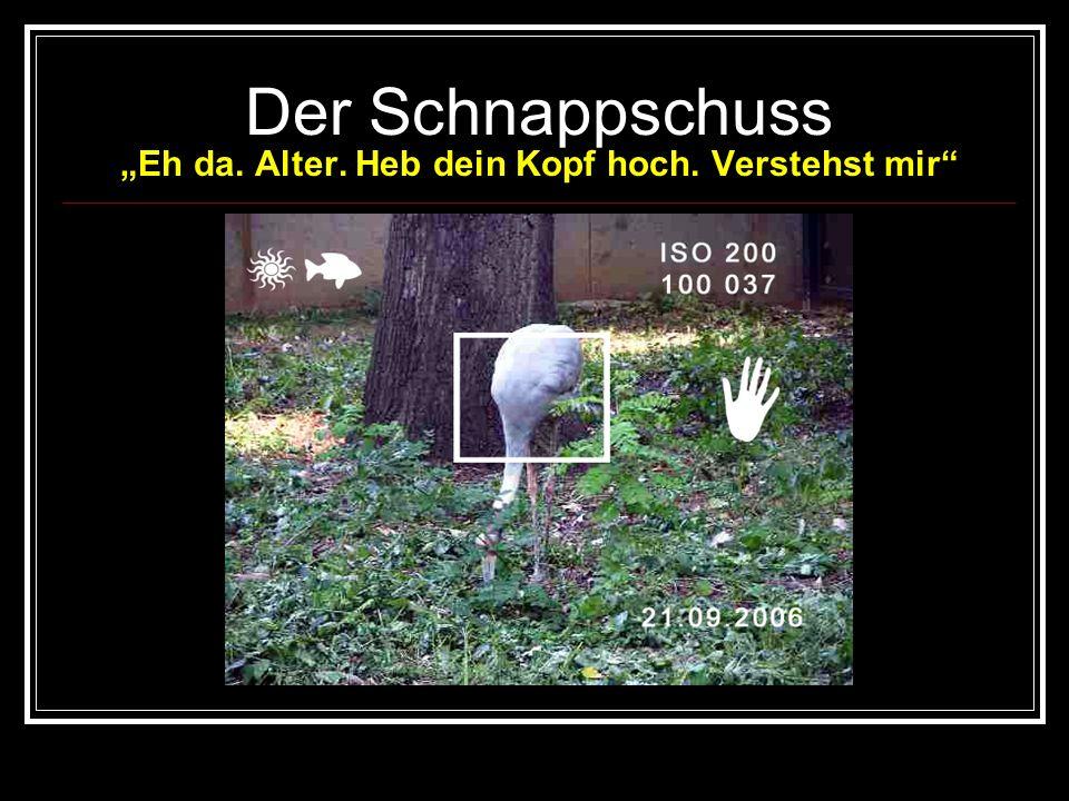 Fotokurs mit man-nie Lektion 1 : Der Schnappschuss Tiere verlangen ein besonderes Einfühlungsvermögen eines guten Fotografen. Das Ansprechen der Tiere