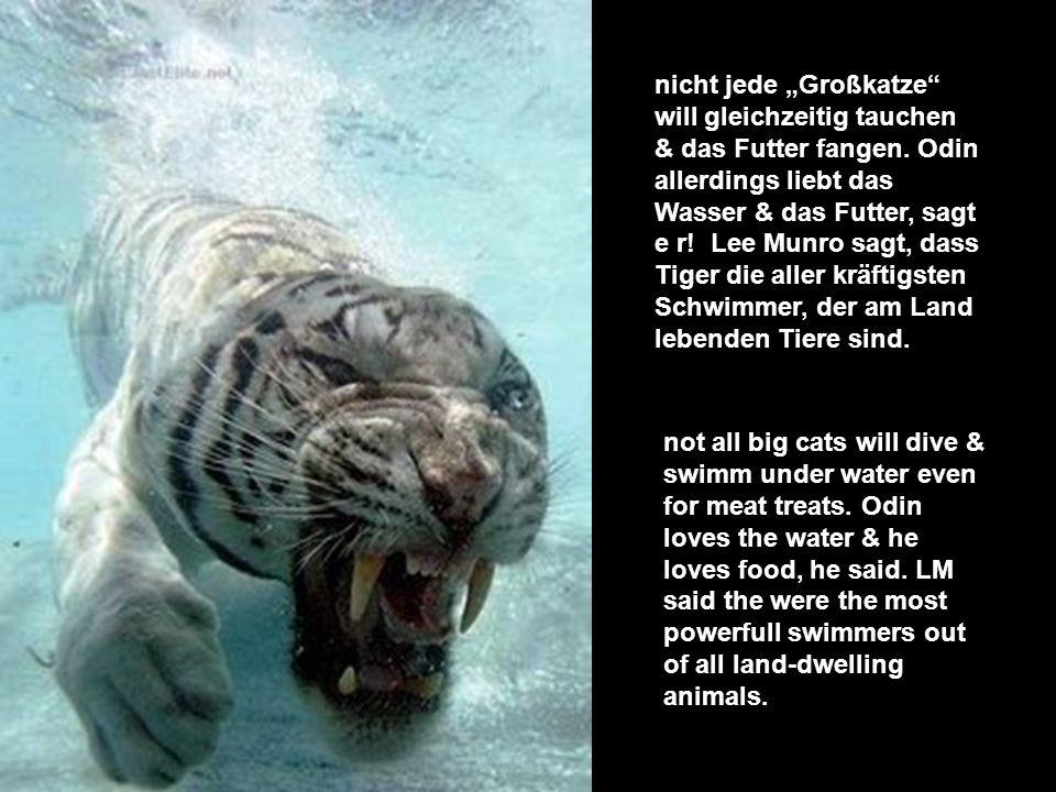 sie jagen ihre Beute um & im Wasser, sie lauern bis die Tiere zum Trinken kommen. Wenn du Odin so im Wasser siehst wirkt er furchterregend. plus they