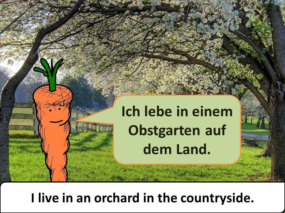 Ich lebe in einem Obstgarten auf dem Land. I live in an orchard in the countryside.