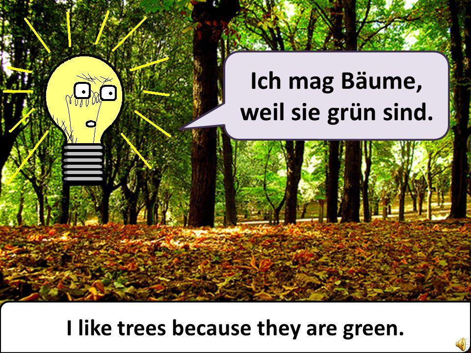 Ich mag Bäume, weil sie grün sind. I like trees because they are green.