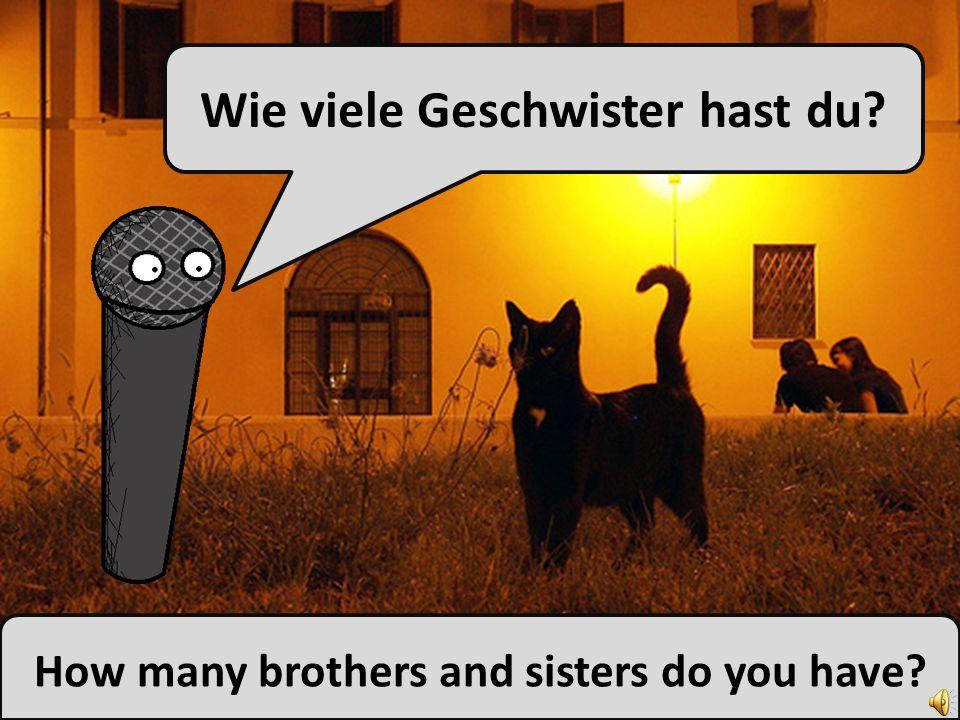Ich habe einen Bruder und zwei Schwestern. I have one brother and two sisters.