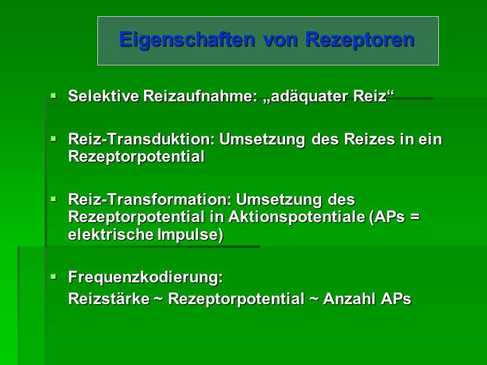 Allgemeine Sinnesphysiologie Reiz Rezeptoren Sinnesorgan ZNS Reiz Rezeptoren Sinnesorgan ZNS Afferenz: peripheres NS (Rezeption) ZNS (Verarbeitung, Antwort) Afferenz: peripheres NS (Rezeption) ZNS (Verarbeitung, Antwort) Efferenz: peripheres NS (Erfolgsorgan) innerviert Muskulatur
