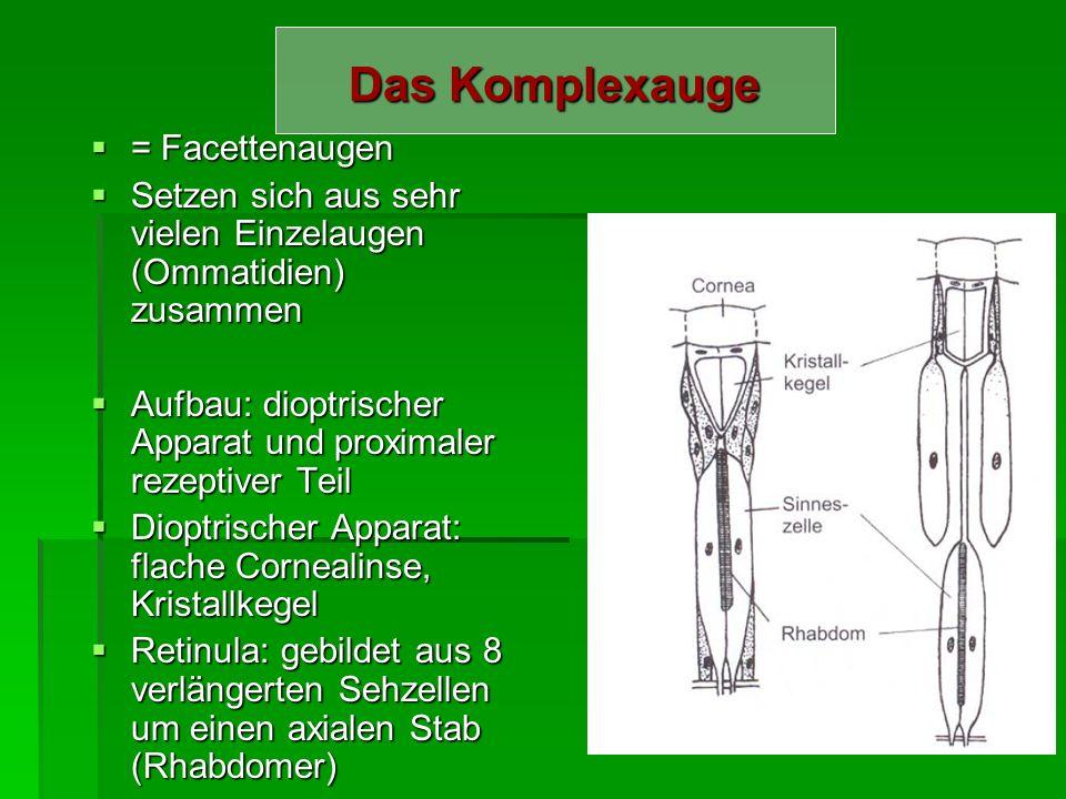 Fehlsichtigkeit Presbyobie Presbyobie Angeborgene Fehler der Augapfelform: Angeborgene Fehler der Augapfelform: Myopie (Kurzsichtigkeit) Myopie (Kurzs