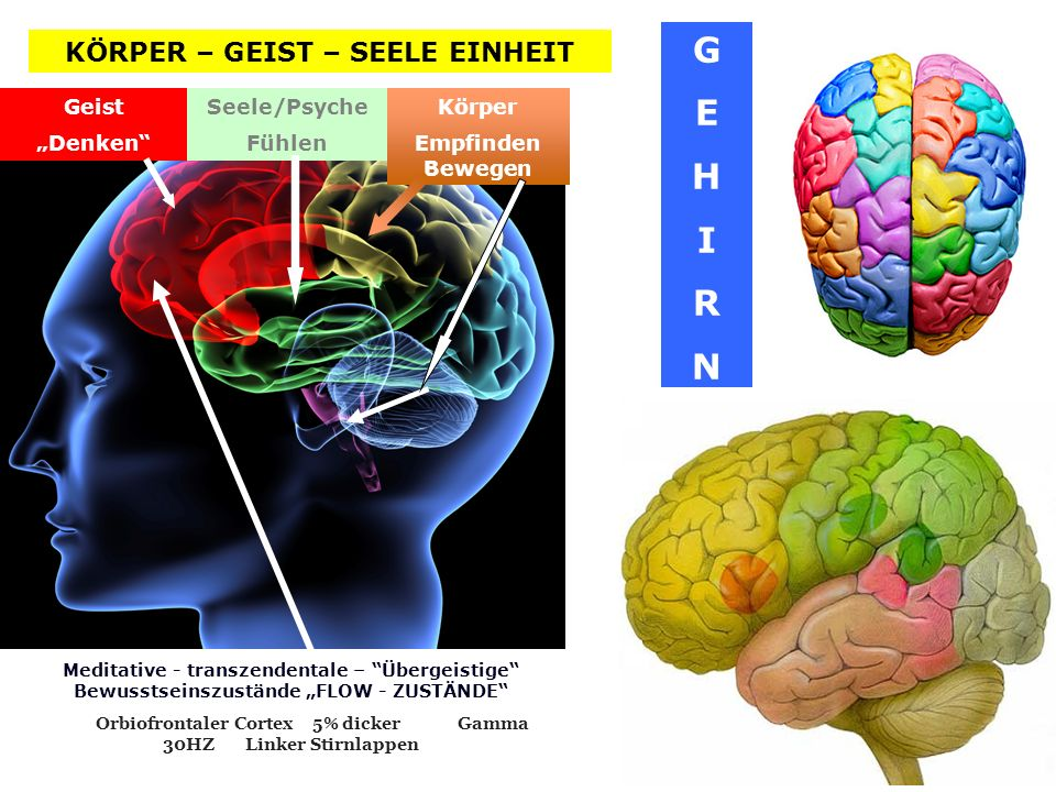 GEHIRNGEHIRN Körper Empfinden Bewegen Geist Denken Seele/Psyche Fühlen Meditative - transzendentale – Übergeistige Bewusstseinszustände FLOW - ZUSTÄND