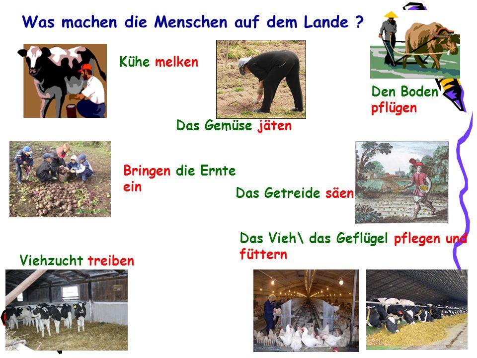 Was machen die Menschen auf dem Lande ? Das Vieh\ das Geflügel pflegen und füttern Das Getreide säen Den Boden pflügen Kühe melken Bringen die Ernte e