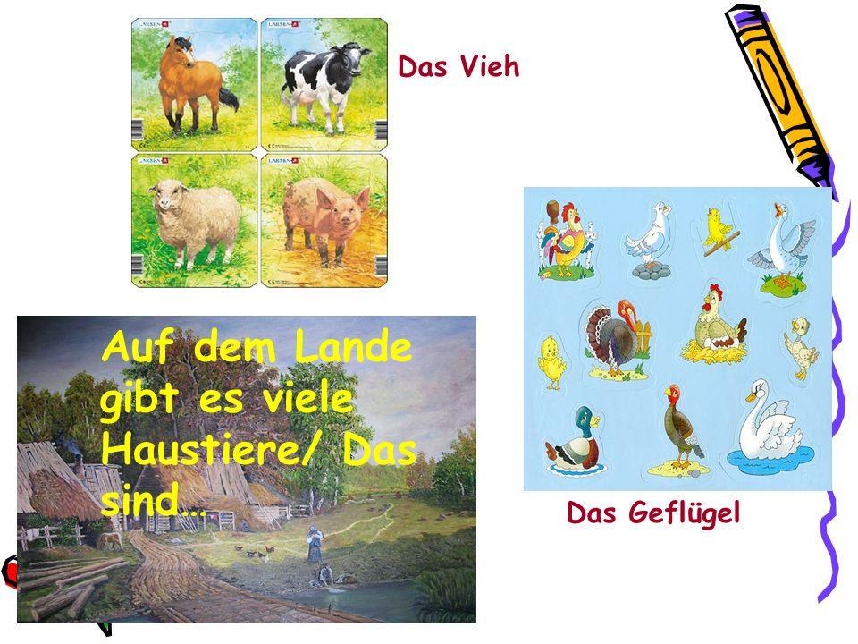 Auf dem Lande gibt es viele Haustiere/ Das sind… Das Vieh Das Geflügel