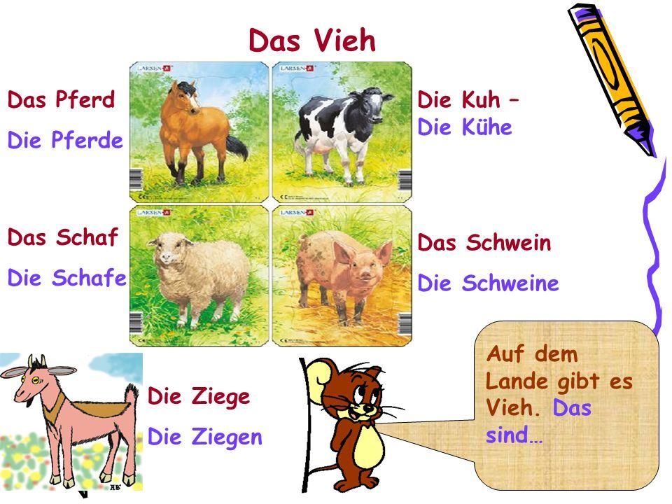Das Vieh Die Kuh – Die Kühe Das Schwein Die Schweine Die Ziege Die Ziegen Das Pferd Die Pferde Das Schaf Die Schafe Auf dem Lande gibt es Vieh. Das si