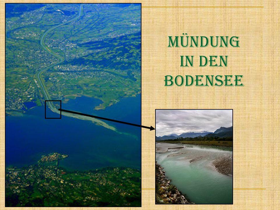Mündung in den Bodensee