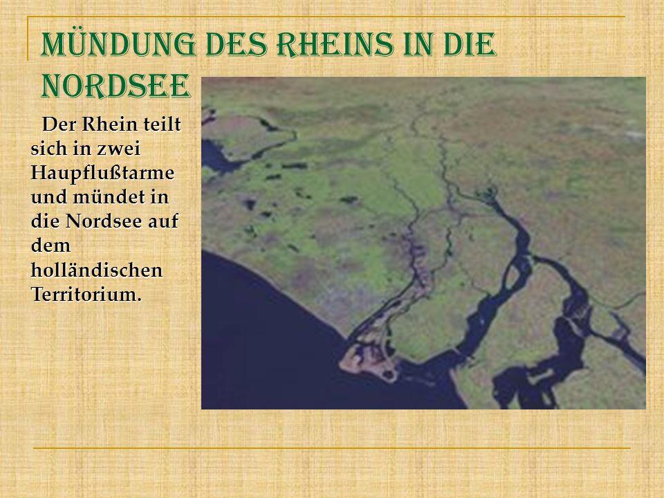 Mündung des Rheins in die Nordsee Der Rhein teilt sich in zwei Haupflußtarme und mündet in die Nordsee auf dem holländischen Territorium. Der Rhein te
