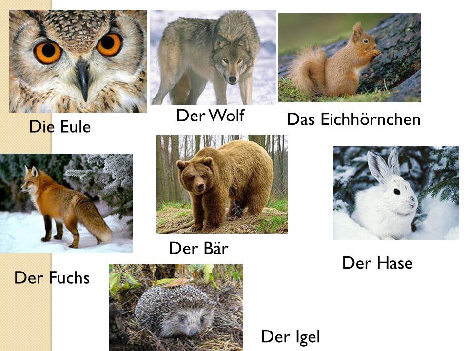 Die Eule Der Wolf Das Eichhörnchen Der Fuchs Der Bär Der Hase Der Igel