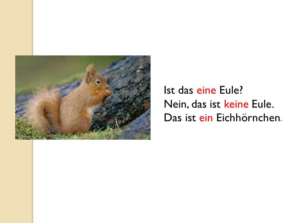 Ist das eine Eule? Nein, das ist keine Eule. Das ist ein Eichhörnchen.