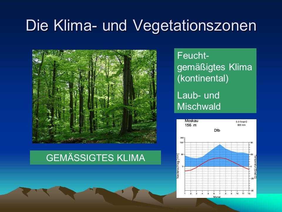 Die Klima- und Vegetationszonen GEMÄSSIGTES KLIMA Feucht- gemäßigtes Klima (kontinental) Laub- und Mischwald