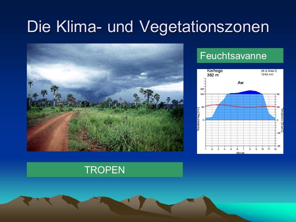 Die Klima- und Vegetationszonen Feuchtsavanne TROPEN