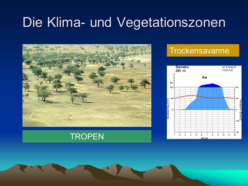 Die Klima- und Vegetationszonen Trockensavanne TROPEN