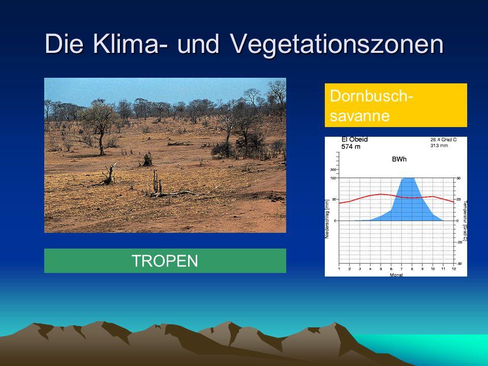Die Klima- und Vegetationszonen TROPEN Dornbusch- savanne