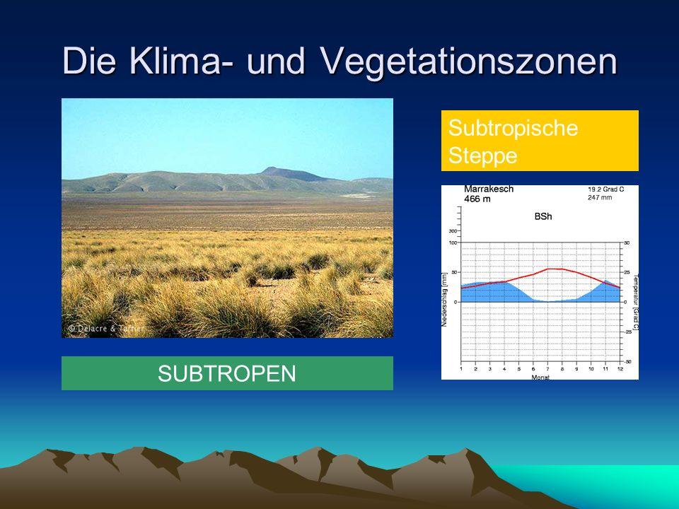 Die Klima- und Vegetationszonen SUBTROPEN Subtropische Steppe
