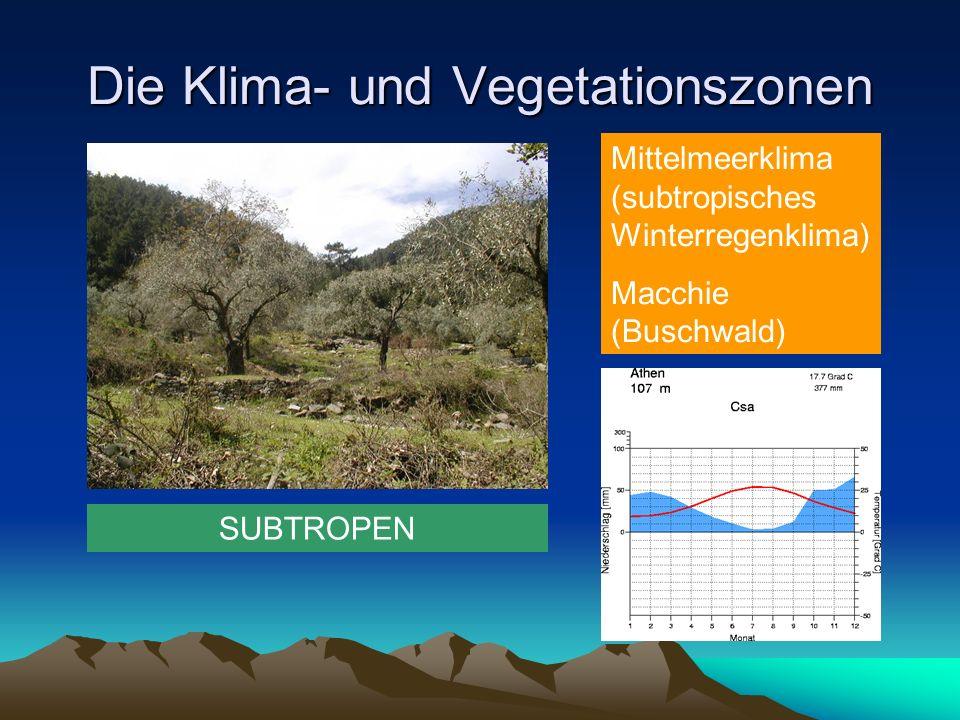 Die Klima- und Vegetationszonen SUBTROPEN Mittelmeerklima (subtropisches Winterregenklima) Macchie (Buschwald)