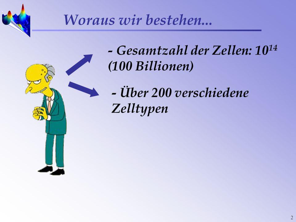 2 Woraus wir bestehen... - Gesamtzahl der Zellen: 10 14 (100 Billionen) - Über 200 verschiedene Zelltypen