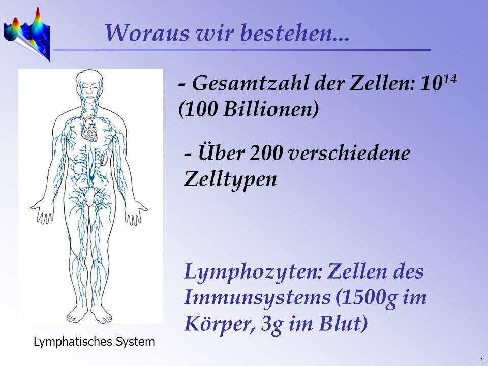 3 Woraus wir bestehen... - Gesamtzahl der Zellen: 10 14 (100 Billionen) - Über 200 verschiedene Zelltypen Lymphatisches System Lymphozyten: Zellen des