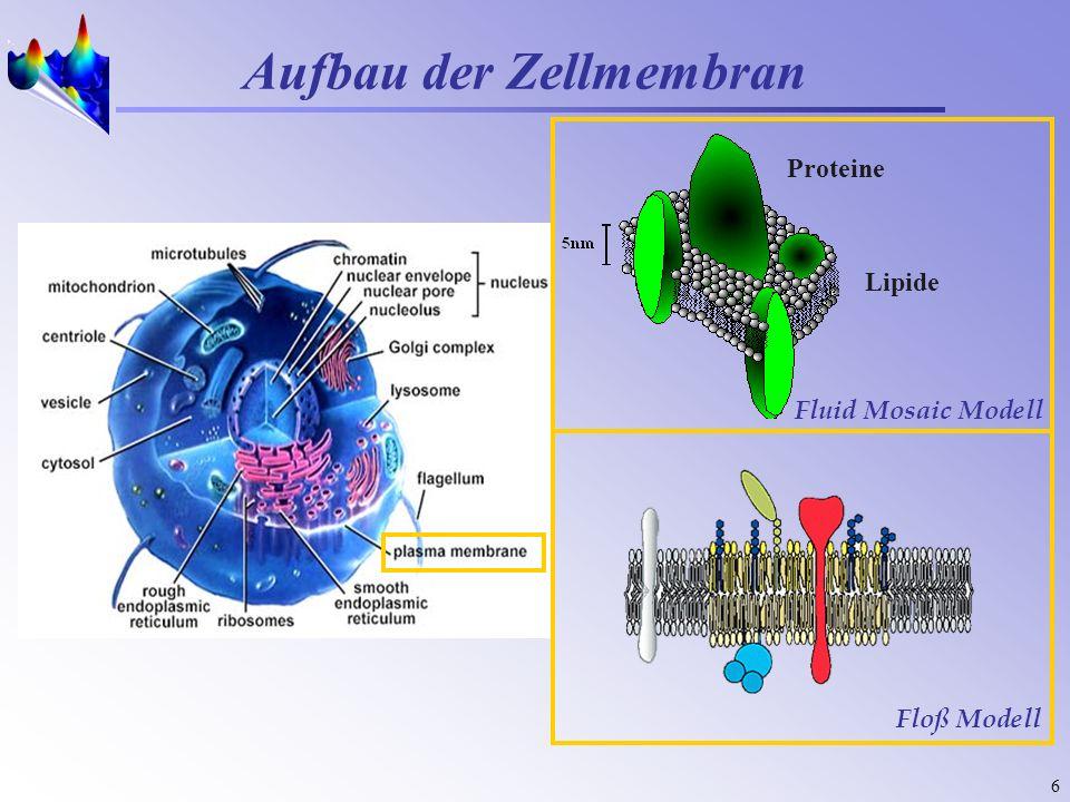 6 Aufbau der Zellmembran Lipide Proteine Fluid Mosaic Modell Floß Modell