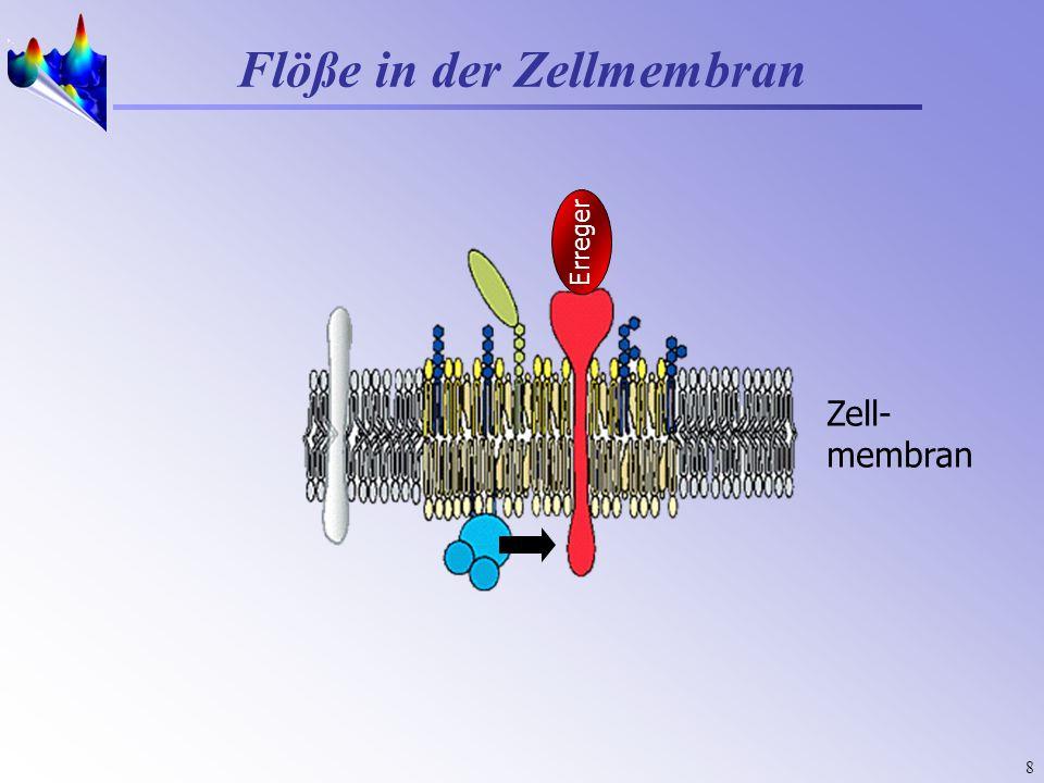 8 Zell- membran Flöße in der Zellmembran Erreger