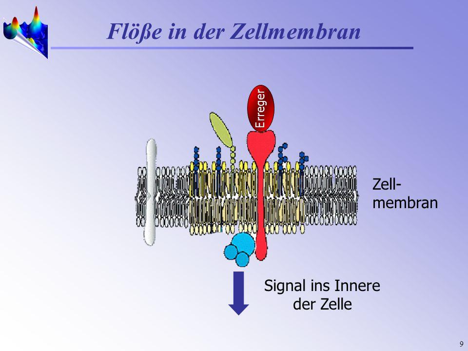 9 Zell- membran Flöße in der Zellmembran Erreger Signal ins Innere der Zelle