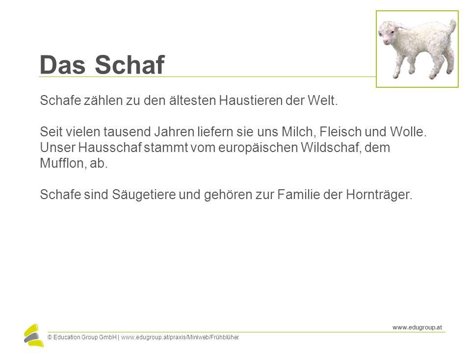 © Education Group GmbH   www.edugroup.at/praxis/Miniweb/Frühblüher www.edugroup.at Das Schaf Schafe zählen zu den ältesten Haustieren der Welt. Seit v