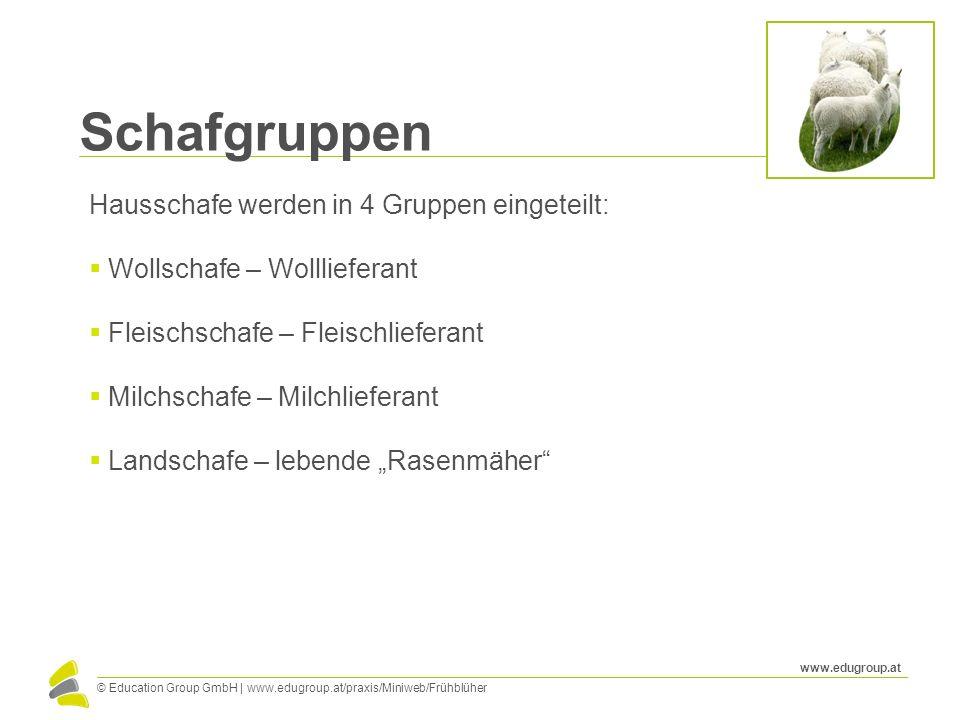 © Education Group GmbH   www.edugroup.at/praxis/Miniweb/Frühblüher www.edugroup.at Schafgruppen Hausschafe werden in 4 Gruppen eingeteilt: Wollschafe