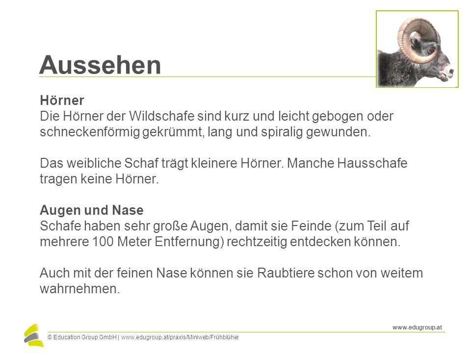 © Education Group GmbH   www.edugroup.at/praxis/Miniweb/Frühblüher www.edugroup.at Aussehen Hörner Die Hörner der Wildschafe sind kurz und leicht gebo