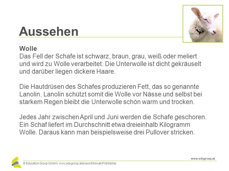© Education Group GmbH   www.edugroup.at/praxis/Miniweb/Frühblüher www.edugroup.at Aussehen Wolle Das Fell der Schafe ist schwarz, braun, grau, weiß o
