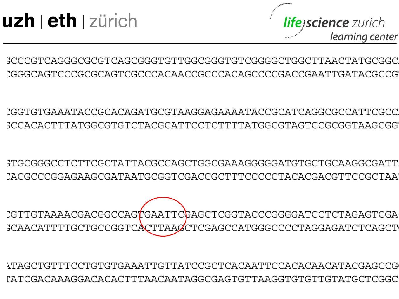 Restriktionsenzyme – Herkunft der Namen Restriktions enzym BakteriumBeschreibung EcoR1Escherichia coli Darm von Tier und Mensch, gerade Stäbchen Bgl1B