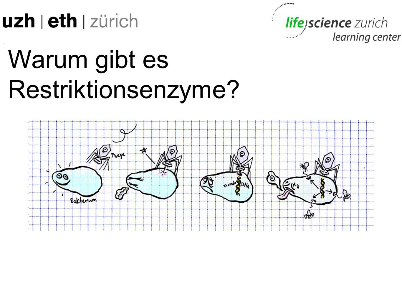 Warum gibt es Restriktionsenzyme? Werner Arber, *1929 in Gränichen Nobelpreis für Physiologie oder Medizin 1978