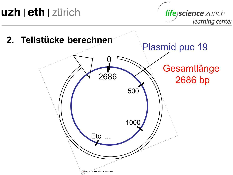 1.Schnittstelle bestimmen Eco RI: 396 Bgl I: 245,1813 Dde I: 171,1081,1490, 1656, 2196, 2622