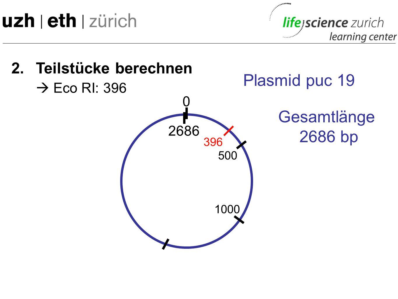 2. Teilstücke berechnen 0 Plasmid puc 19 Gesamtlänge 2686 bp 2686 500 1000 Etc....