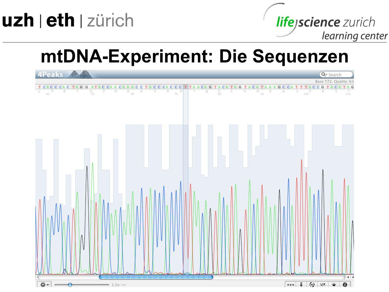 mtDNA-Experiment: Ueberblick -Mundschleimhaut gewonnen -mitochondriale DNA (mtDNA) isoliert -Gezielt eine sehr individuelle Region der mtDNA vervielfä