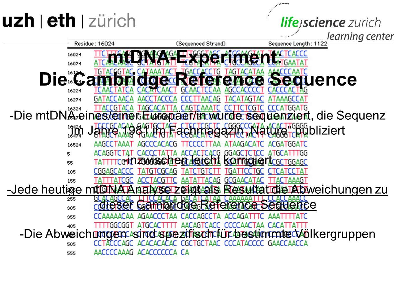 mtDNA-Experiment: Die Sequenzen