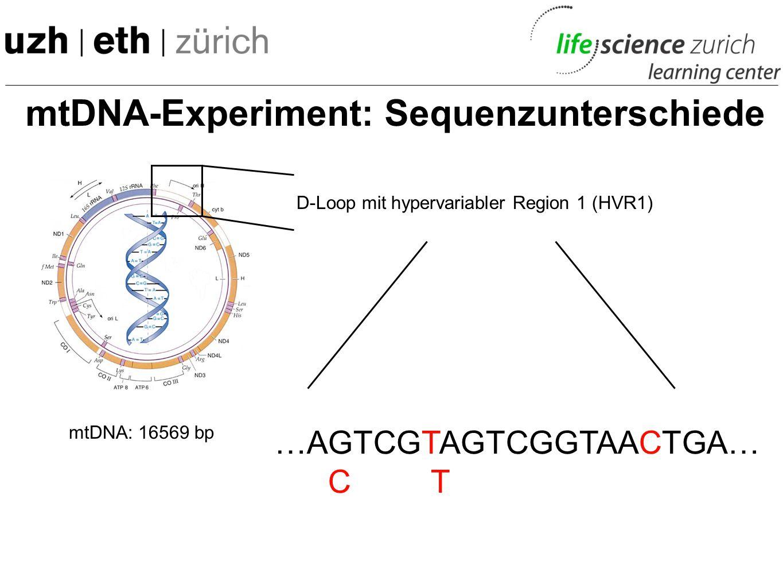 mtDNA-Experiment: Die Haplogruppen -Verschiedene Völkergruppen unterscheiden sich also verschieden stark von der Cambridge Reference Sequence (H2b) -D