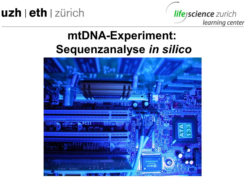 mtDNA-Experiment: Sequenzunterschiede mtDNA: 16569 bp D-Loop mit hypervariabler Region 1 (HVR1) …AGTCGTAGTCGGTAACTGA… C T