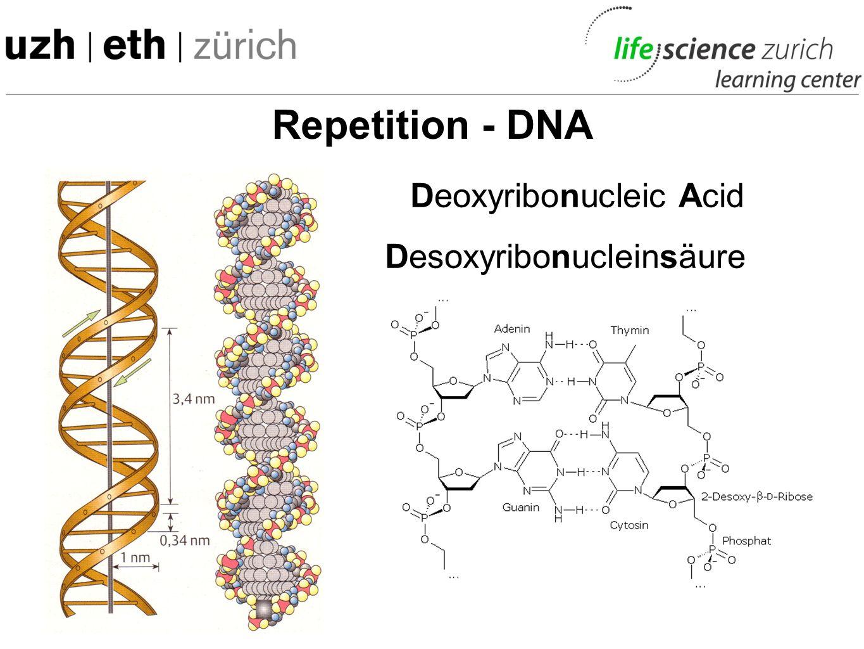 Deoxyribonucleic Acid Desoxyribonucleinsäure Repetition - DNA