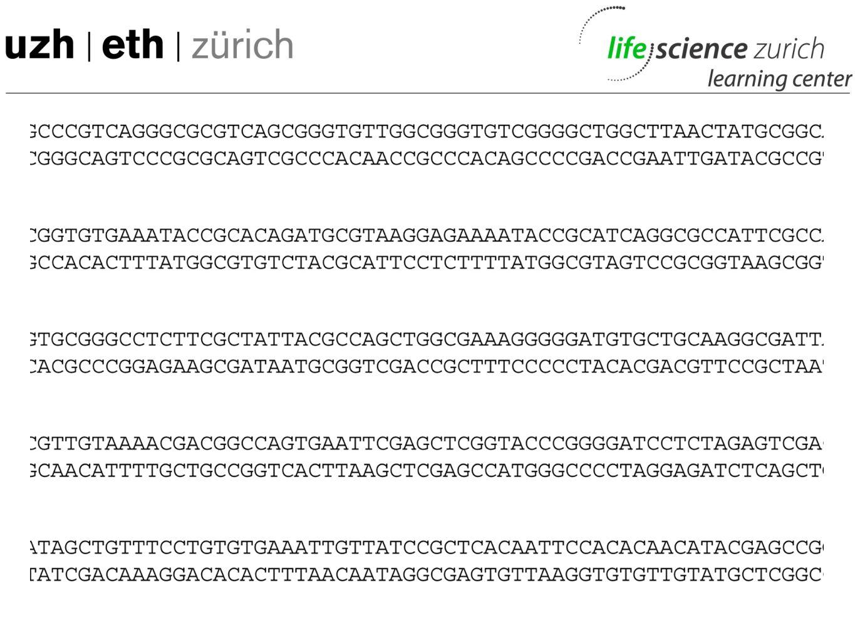 mtDNA-Experiment: Vergleich der eigenen Daten -z.B.