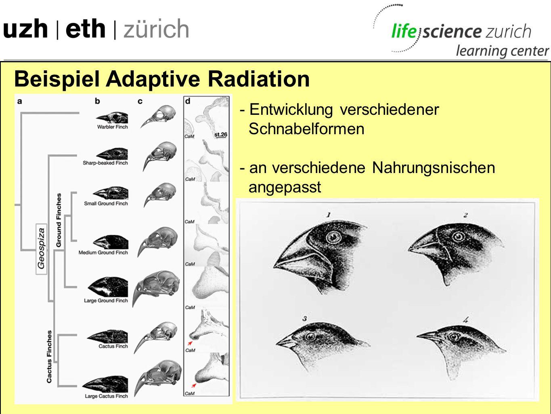 Beispiel Adaptive Radiation Charles Darwin Vater der Evolu- tionstheorie On the Origin of Species