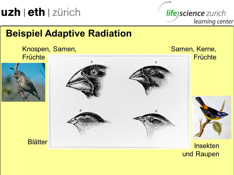 Beispiel Adaptive Radiation - Entwicklung verschiedener Schnabelformen - an verschiedene Nahrungsnischen angepasst
