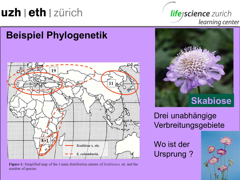 Beispiel Adaptive Radiation Knospen, Samen, Früchte Samen, Kerne, Früchte Blätter Insekten und Raupen