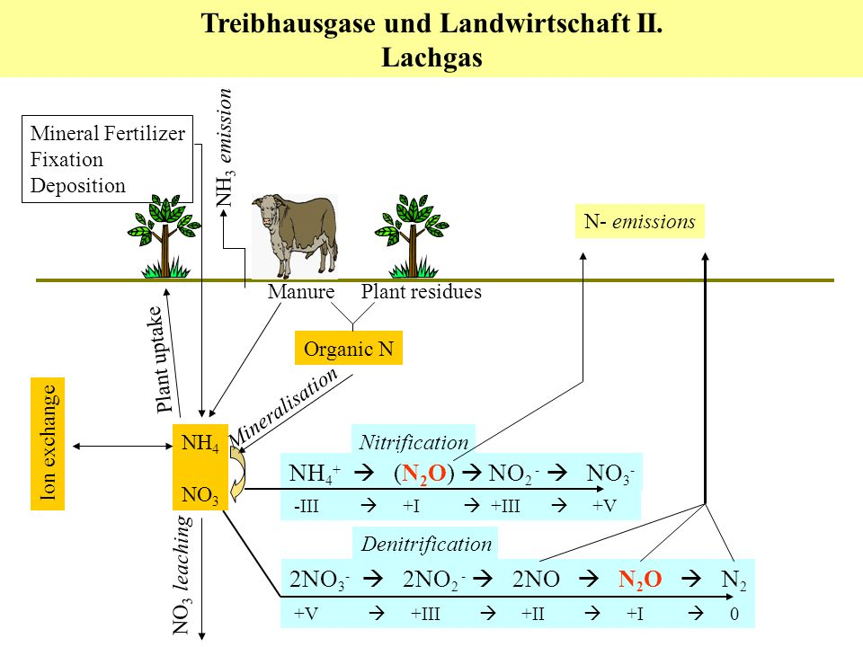 Mineral Fertilizer Fixation Deposition NH 4 NO 3 Plant residues Mineralisation Ion exchange Manure Organic N NO 3 leaching NH 3 emission 2NO 3 - 2NO 2 - 2NO N 2 O N 2 Denitrification +V +III +II +I 0 Plant uptake Nitrification NH 4 + (N 2 O) NO 2 - NO 3 - -III +I +III +V N- emissions Treibhausgase und Landwirtschaft II.