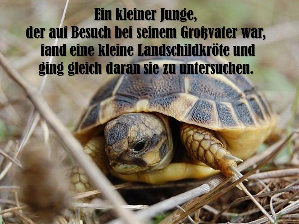 Ein kleiner Junge, der auf Besuch bei seinem Großvater war, fand eine kleine Landschildkröte und fand eine kleine Landschildkröte und ging gleich dara