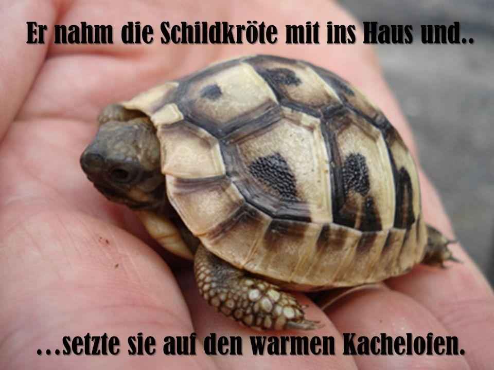 Er nahm die Schildkröte mit ins Haus und.. …setzte sie auf den warmen Kachelofen.