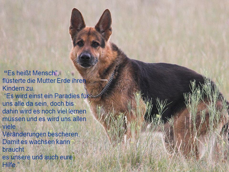 Die Bedeutung des Hundes für den Menschen... Als Mutter Erde das jüngste Kind von ihr und Vater Sonne gebar, kamen alle älteren Kinder ans Kinderbett,