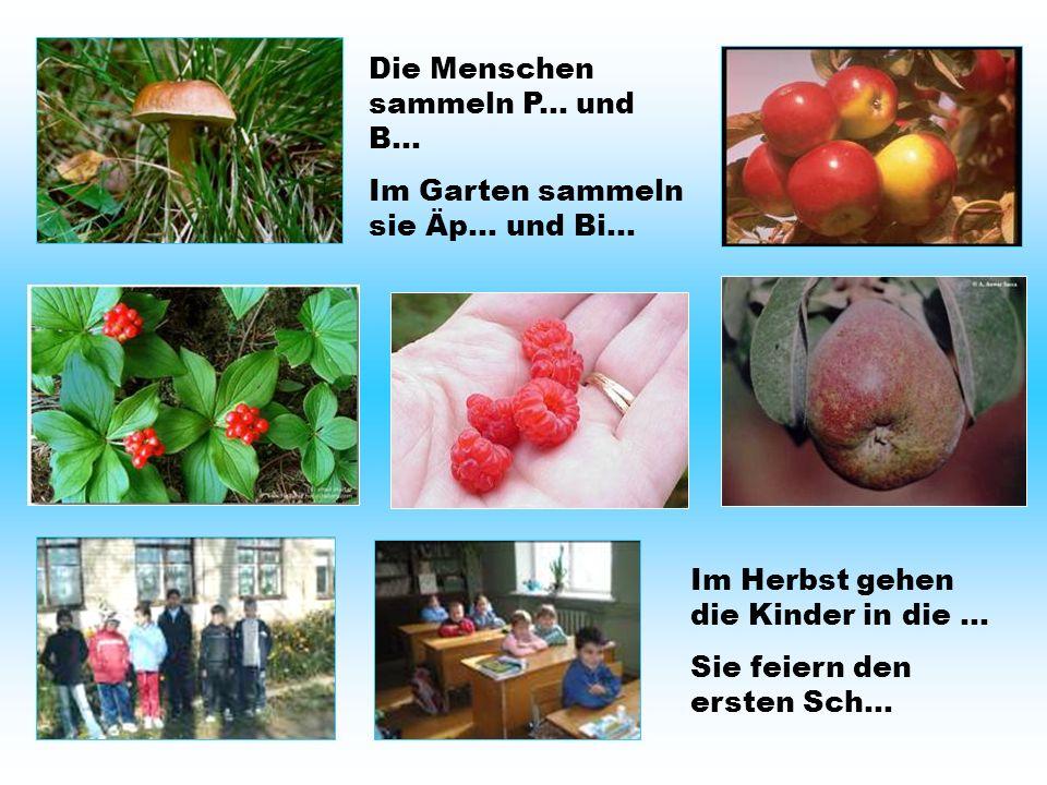 Die Menschen sammeln P... und B... Im Garten sammeln sie Äp… und Bi… Im Herbst gehen die Kinder in die... Sie feiern den ersten Sch...
