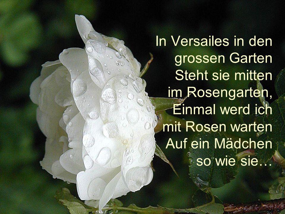 In Versailes in den grossen Garten Steht sie mitten im Rosengarten, Einmal werd ich mit Rosen warten Auf ein Mädchen so wie sie…