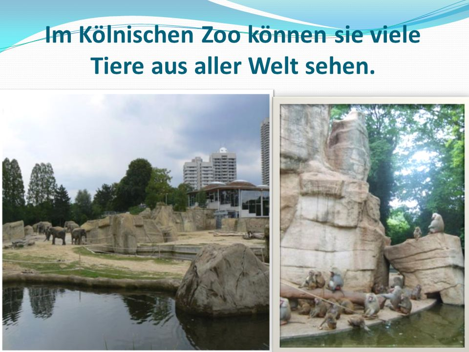 Im Kölnischen Zoo können sie viele Tiere aus aller Welt sehen.